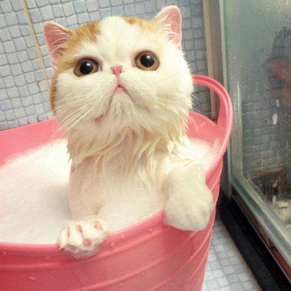 кот снупи купается