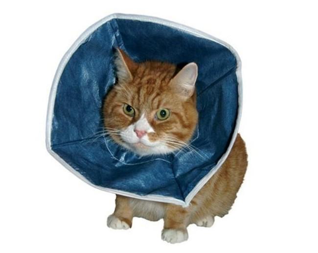 Защитный воротник Kruuse Buster Soft Collar для кота